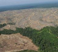 Deforestación creció 222% en la Amazonía brasileña