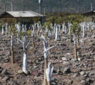 Chile: más de 150 comunas en emergencia por falta de agua