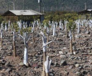 Chile registra hasta 80% de déficit de lluvia en julio