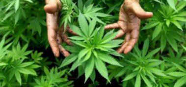 México aprobó el cultivo y uso recreativo del cannabis