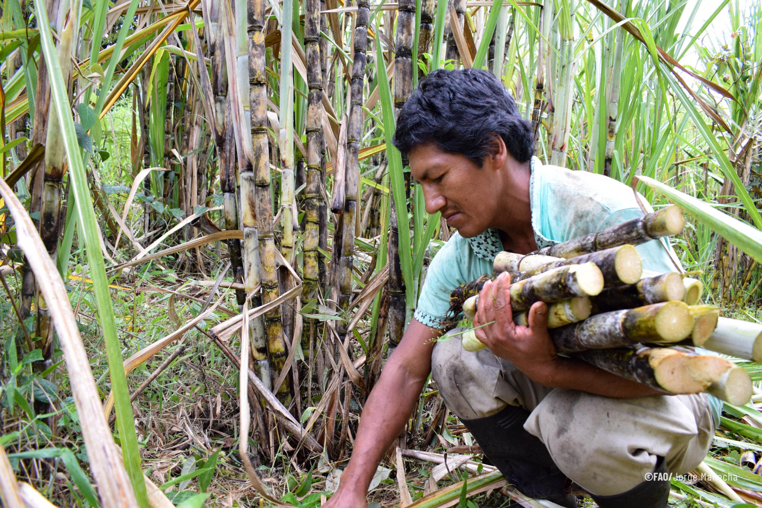 Pueblos indígenas, mejores guardianes de los bosques